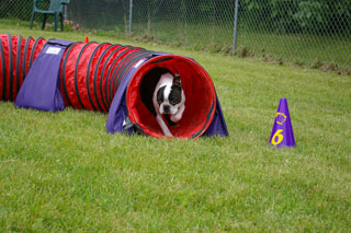 9b50335c53fb Happy Feet Agility | Roy's Run Agility Benefit Helps with Canine ...